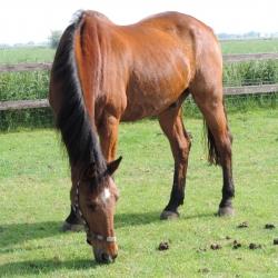 Bed en breakfast voor paardenliefhebbers